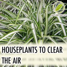 How To Use House Plants to Filter Your Indoor Air