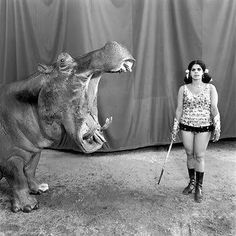 Great interview with photographer Mary Ellen Mark. Photo: Hippopotamus and Performer, Great Raynow Circus, Madras, India, by Mary Ellen Mark Mary Ellen Mark, Cirque Vintage, Old Circus, Circus Train, Circus Performers, Pantomime, Photocollage, Big Top, Advertising Photography