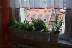 uprawa ziół na balkonie - wskazówki