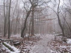 walk in the woods on a frosty morning
