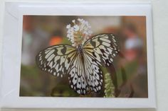 Butterfly Blank Photo Note Card by manukai on Etsy