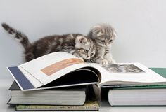 #cats #books