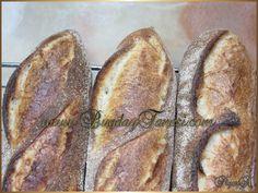 Nohut Mayası (Tatlı Maya) … – Buğday Tanesi Gluten, Bread, Food, Brot, Essen, Baking, Meals, Breads, Buns