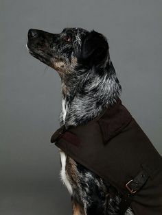 Barbour Wax Cotton Dog Coat http://www.freepeople.com/whats-new/barbour-wax-dog-coat/
