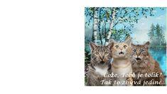 Pro více pohlednic použij odkaz For more birthday cards use the link