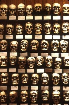 Skulls from the Mutter Museum of medicine, Philadelphia, PA. June 2013. Me , Jean and Mom!