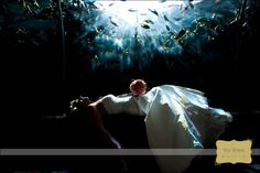 Thanks to Wes Weber Photography for this stunning shot at a Florida aquarium!