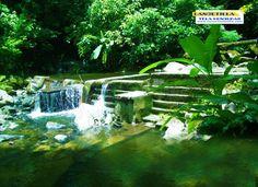 Buen dia!! Para los amantes de la naturaleza y que les encanta nadar en aguas critalinas, tour a LANCETILLA, TELA HONDURAS Punto de encuentro, centro de visitantes Lancetilla a las 8:45am Contacto(504)9480-0353