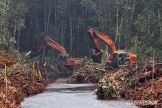 Así es el nuevo compromiso de Asia Pulp & Paper | Greenpeace España
