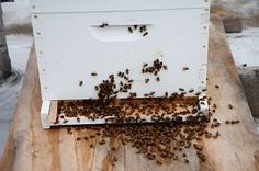 Can I Raise Bees In My Backyard 132 best backyard beekeeping tips images on pinterest | bees