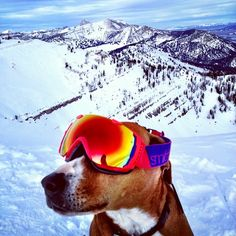 skiing dog in Jackson Hole, Wyoming