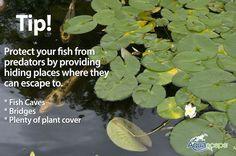 Deter visiting pond predators
