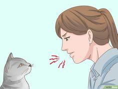3 manières de parler avec votre chat - wikiHow Devon Rex, Natural Ant Repellant, Chat Oriental, Cat Steps, Son Chat, Puppy Training Tips, Cat Behavior, Cat Collars, Kittens