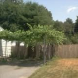 A Cheap Way to Build Your Own Garden Arbors: Picture of a grape arbor.