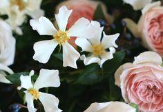 写真はバラの「ジル」。一重のバラは咲きの早いものが多くてでもこの可憐さは、ほかの何にも代えがたい気がします。予告すると今日も無駄に長いので、別ページへの記...