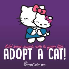 Add some supercute to your life - Adopt at cat #CatLovers #AdoptACat #HelloKitty