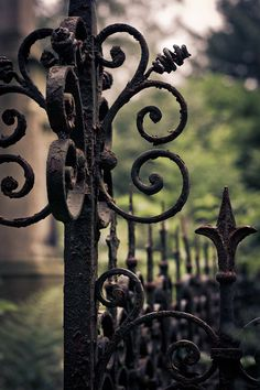 Had a wrought iron fence and gate in my yard/garden in Portland . Art Fer, Old Gates, Gothic Garden, Wrought Iron Fences, Black Garden, Iron Art, My Secret Garden, Garden Gates, Dream Garden