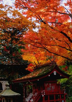 Autumn color | Flickr - Photo Sharing!