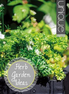 Unique ideas for herb gardens- Great designs and tutorials for amazing herb gardens.