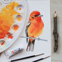 Flame-colored Tanager painting by PRINTSPIRING