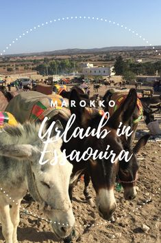 Sehenswürdigkeiten in Essaouira – Alles, was Du für Deine Reise mit Kind wissen musst. #Marokko #Essaouira #Reiseblg