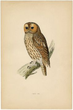 Vintage Printable Owl. Grab the full size Printable on The Graphics Fairy for Free!