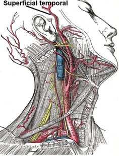 Combative Anatomy: Using a knife for self defense Exigent Circumstances Neuralgia Occipital, Trigeminal Neuropathy, Autogenic Training, Tactical Training, Combat Training, Arte Com Grey's Anatomy, Cluster Headaches, Self Defense Tips, Personal Defense