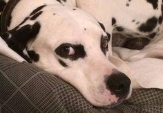 ¡Ojo! Tu perro se acuerda de todo lo que haces (y lo hará) | Blog AnimalesyCia | EL PAÍS