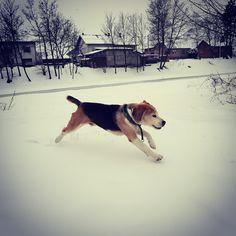 Senior dog with young legs Oscar is in year 10 in pretty good shapehttps://i.redd.it/wdfsm2kvdtk01.jpg