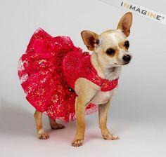 ravishing in red lace  :)