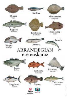 Getxo - Getxon bizi - Euskera - Kanpainia - Kanpainak