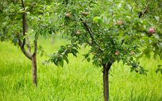 10 best trees for small gardens: Beautiful small trees Malus-domestica You don't need a huge garden Small Trees For Garden, Garden Front Of House, Small Front Gardens, Big Garden, Garden In The Woods, Garden Trees, Dream Garden, Small Garden For Wildlife, Garden Art
