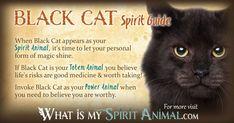 Black Cat Symbolism & Meaning Black Cat Spirit, Totem & Power Animal black color dream meaning - Black Things Spirit Animal Totem, Animal Spirit Guides, Your Spirit Animal, Animal Totems, Black Cat Meaning, Cat Symbolism, Animal Totem Meanings, Native American Animals, Power Animal