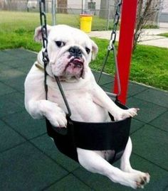 Yeah you....yeah you mister. Can you push me in my swing?