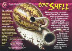 Wild Creatures, Strange Creatures, Adventure Magazine, Monster Book Of Monsters, Cute Animal Illustration, Underwater Creatures, Animal Facts, Marine Biology, Animal Species