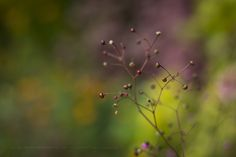 Delicate Beauty by Pedro Galamarra on 500px