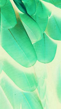 Feather Green Blue Nature Texture Animal Pattern #iPhone #6 #plus #wallpaper