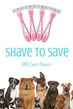 When You Buy From 99 Cent Razor Youre Helping To Donate Money An Animal Rescue Organization Shave Save
