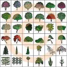 Landscape Design Symbols | Ornamental Trees - Color