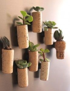 DIY Decorative Cork Planters.  Already 5 are growing on my fridge for several weeks now!!!