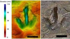 A false colour image of a Theropod dinosaur track.  The different colours signify different depths of the footprint.