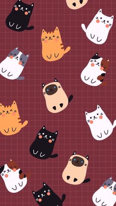 56 Ideas cats wallpaper iphone backgrounds phone wallpapers for 2019 Kitty Wallpaper, Cartoon Wallpaper, Kawaii Wallpaper, Trendy Wallpaper, Wallpaper S, Pattern Wallpaper Iphone, Wallpaper Iphone Cute, Pattern Lockscreen, Natur Wallpaper