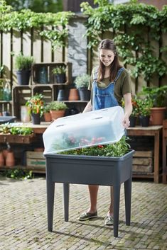 Uprawa warzyw w domu - co wysiać w marcu?