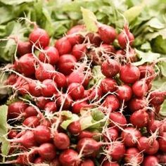 Radishes do not freeze well raw.