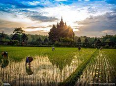 """Sunrise Plaosan Temple,"" Plaosan Temple, Yogyakarta, Indonesia, Places Category"