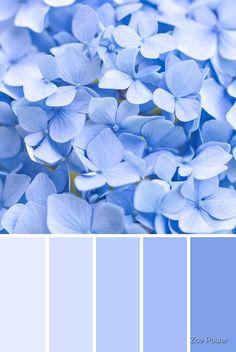 'Pastel blue Hydrangea Colour Palette' by Zoe Power