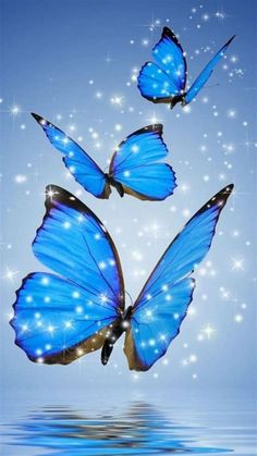 Wallpaper IPhone Blue Butterfly With HD Resolution