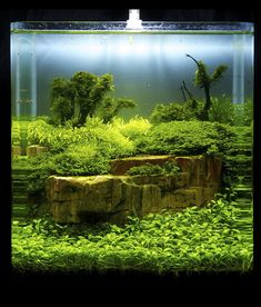 die 19 besten bilder von nano aquascaping aquarien planted aquarium und aquarium design. Black Bedroom Furniture Sets. Home Design Ideas