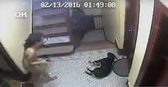 NYPD Cop Shooting Dog Extended Video Emerges, They Beat Owner Too
