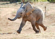 i love elephants #elephants#babyelephant#